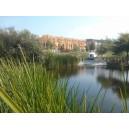 Commercial Pond Maintenance Programs