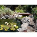 Residential Pond Maintenance Programs